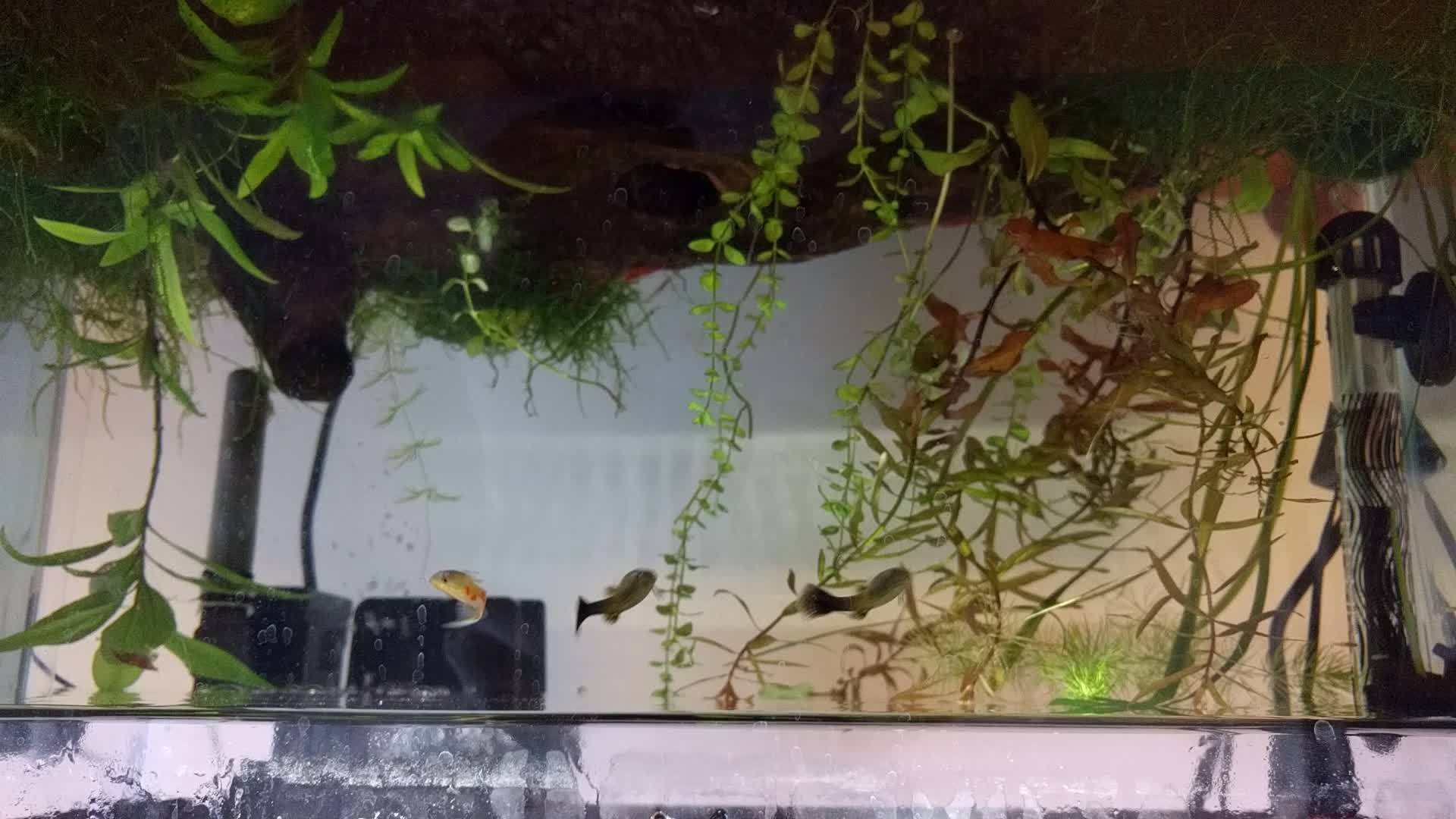 Hungry Hungry Guppies GIFs