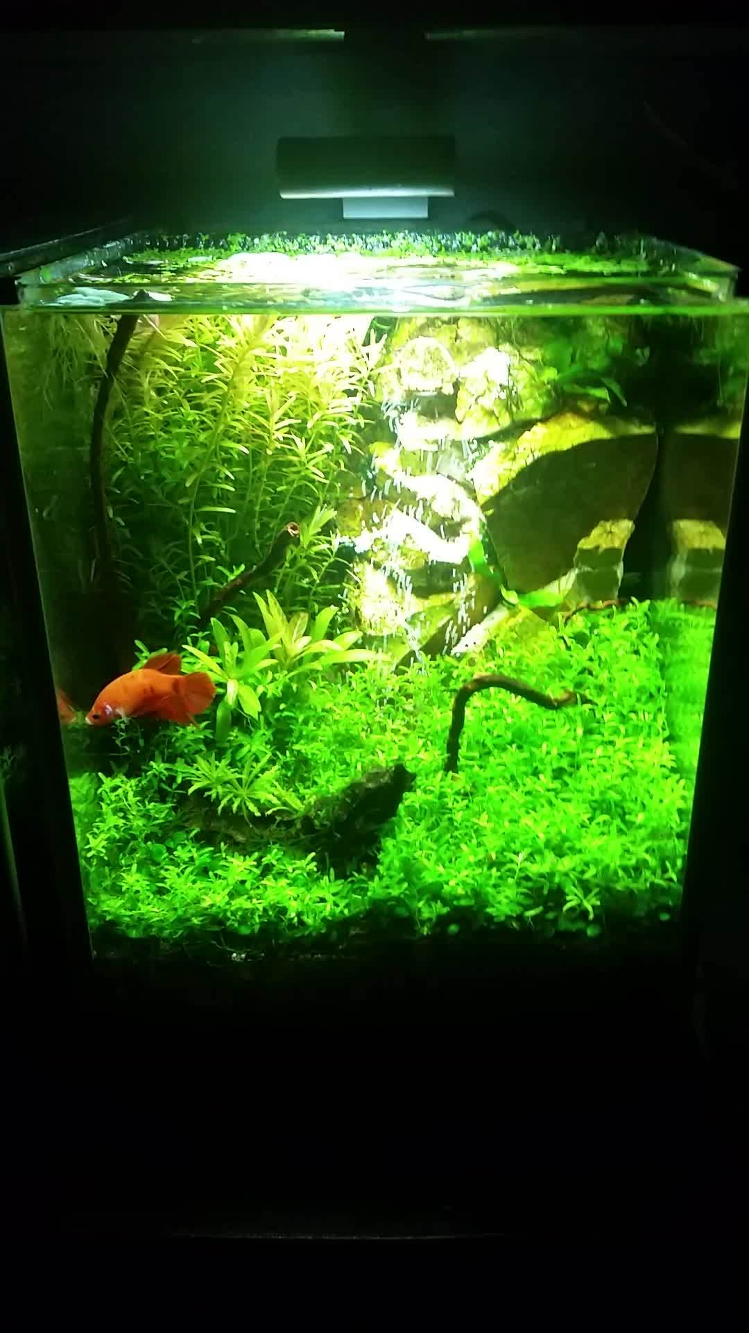 aquariums, bettafish, plantedtank, Water in a Fluval Spec III Aquarium. GIFs