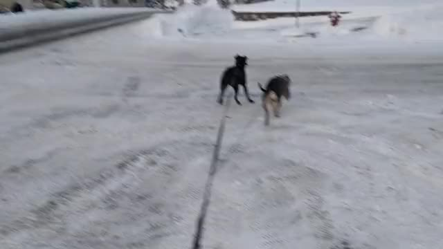 Watch Making Dad's Life Difficult in Three Easy Steps! GIF by @damndonkeys on Gfycat. Discover more puppu, wurf GIFs on Gfycat