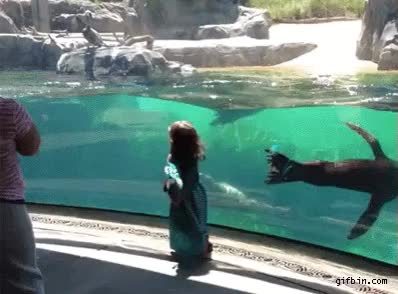 Watch and share 1369070880 Sea Lion Worried About Little Girl Falling GIFs by Nothing on Gfycat