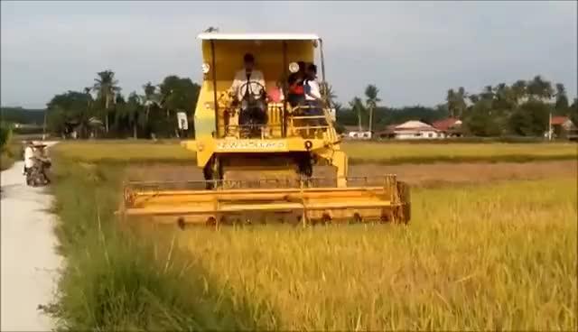 Watch and share Mesin Padi 1545 S Menuai Padi Di Padang Cempedak Ahad 100716 GIFs on Gfycat
