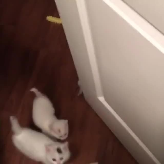 Watch and share Kittens GIFs and Cats GIFs by Koleandra on Gfycat