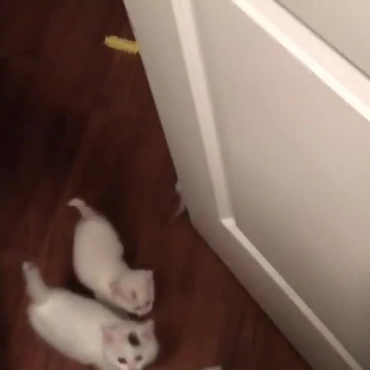 cat, cats, kittens, Hello kittens GIFs