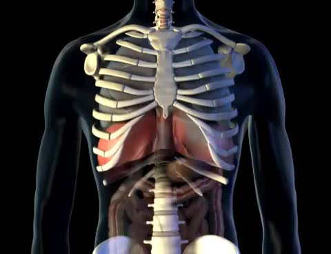 Watch Diaphragm - 3D Medical Animation || ABP © GIF on Gfycat. Discover more related GIFs on Gfycat