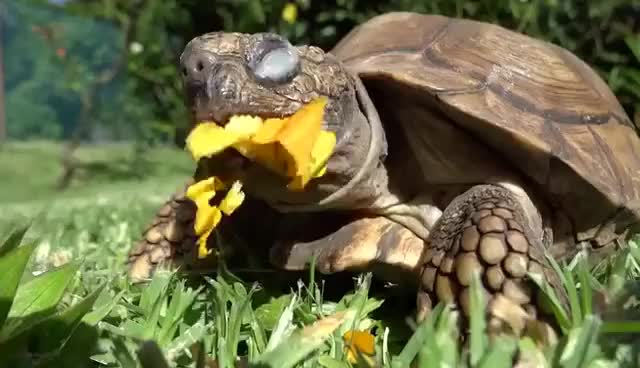 Watch this turtle GIF on Gfycat. Discover more turtle GIFs on Gfycat