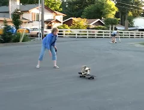 corgi, dog, skateboard, Skateboarding Corgi GIFs