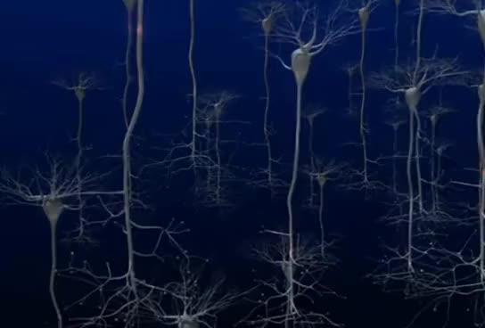 Watch and share Nervous System GIFs and Neuron Cells GIFs on Gfycat