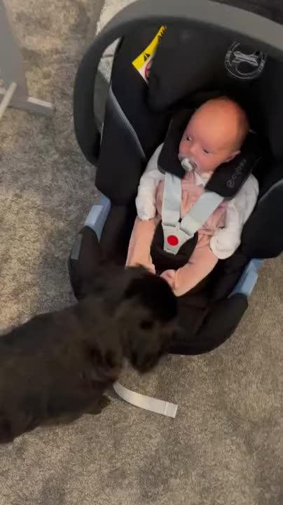 Watch and share Baby Drops Pacifier In  - 1213981 GIFs by iceheart on Gfycat