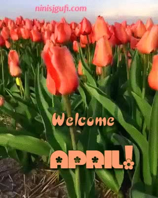 Watch Welcome, April! GIF by Nini (@ninis_jgufi) on Gfycat. Discover more april, spring, tulips GIFs on Gfycat