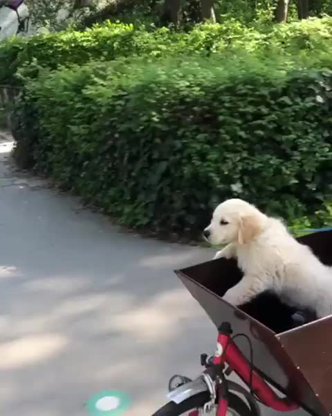 bicycle, bike, puppy, going out for an adventure! GIFs