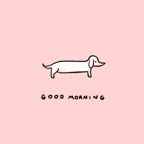dachsund, doxie, good morning, stefanie shank, stretch, Good Morning Doxie GIFs
