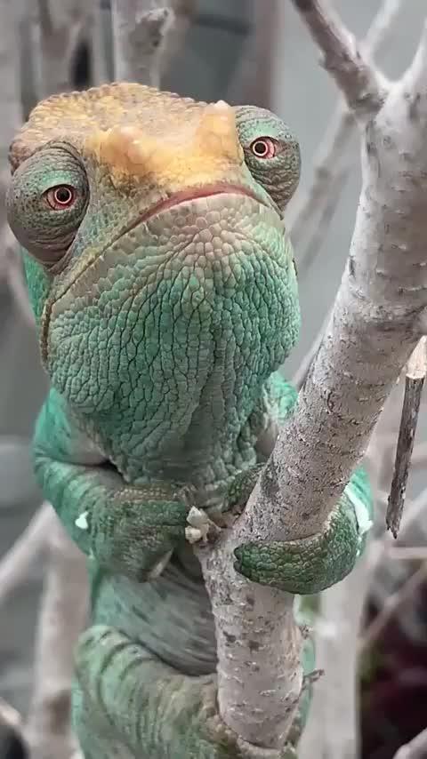 funny, lizard, Lizard GIFs