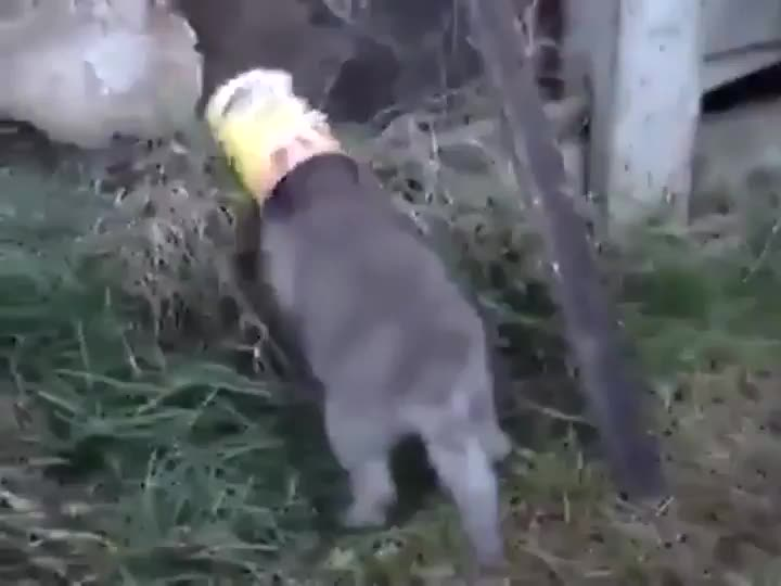 A man saving a fox cub that got its head wedged in a can GIFs