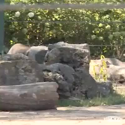 The Louisville Zoo's baby elephant is finally on display! You can tell the li... GIFs