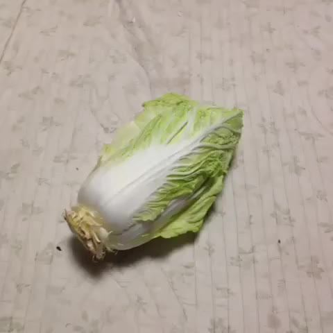 Watch cabbage GIF on Gfycat. Discover more related GIFs on Gfycat