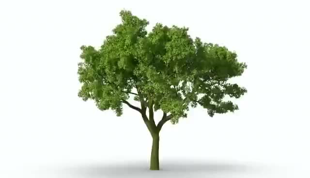 Watch and share Growing Tree GIFs on Gfycat