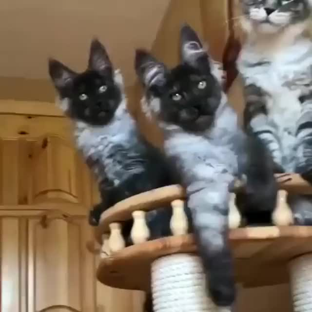 Watch and share Kittens GIFs and Cats GIFs by tothetenthpower on Gfycat