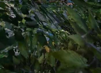 Watch and share Honeycam 2018-11-01 22-32-43 GIFs on Gfycat
