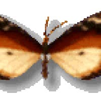 Watch Moth GIF on Gfycat. Discover more related GIFs on Gfycat