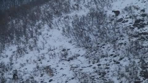 Watch and share Cougar Jumps Over A Stand Of Trees To Attack A Mule Deer GIFs by Pardusco on Gfycat