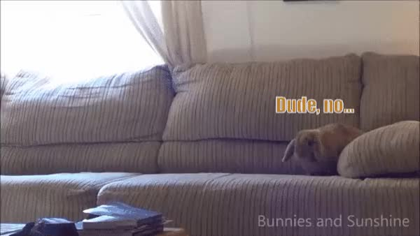 Watch and share (Request Filled) Crash Test Bunny (reddit) GIFs on Gfycat