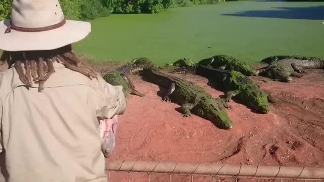 Watch this crocodile GIF on Gfycat. Discover more crocodile, diles GIFs on Gfycat