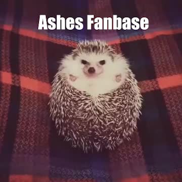 Watch and share Ashes Of Creation GIFs by Cambiguous on Gfycat