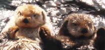 otters GIFs