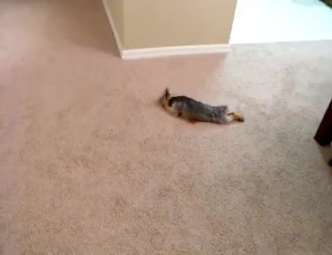 Watch and share Carpet Swim GIFs on Gfycat