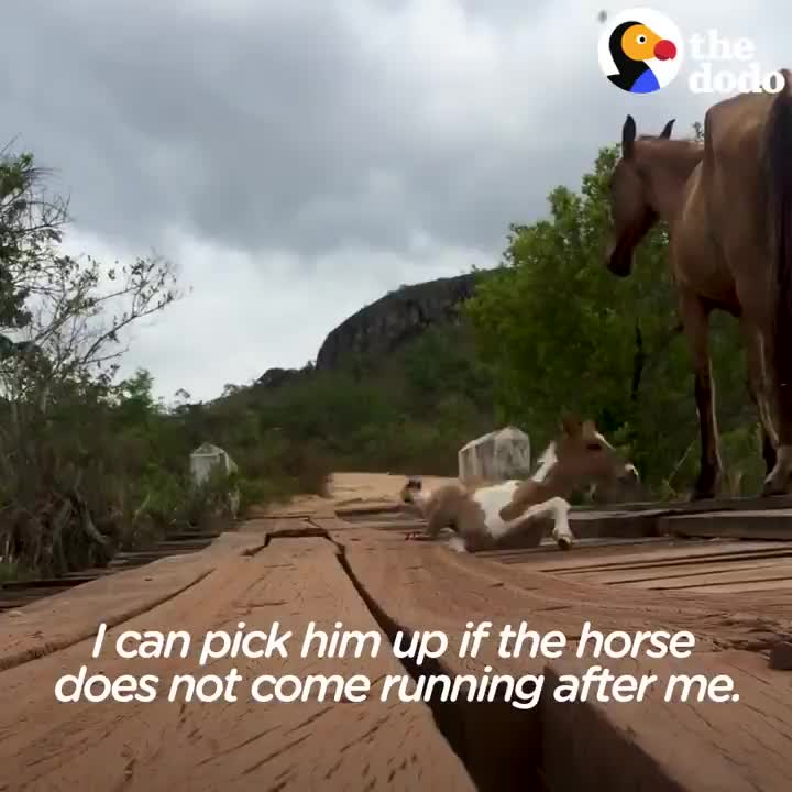 Man rescues a horse that slipped through a train track GIFs