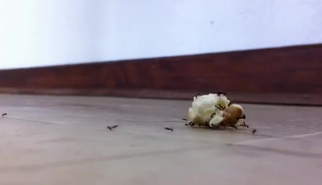 Watch and share Ants GIFs and Ant GIFs on Gfycat