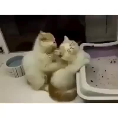 Watch and share Awwgifs GIFs and Catgifs GIFs on Gfycat