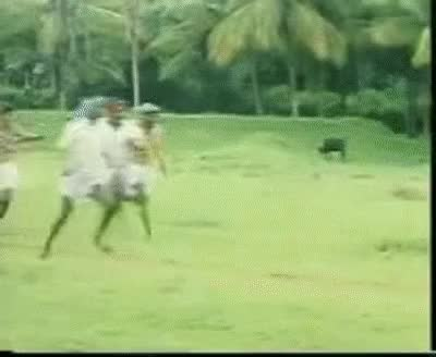 Watch and share Vadivelu Koli (hen) Comedy Panjalanguruchi GIFs on Gfycat