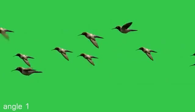 Watch and share Free Green Screen - Flying Birds Animated (Moving) HD GIFs on Gfycat