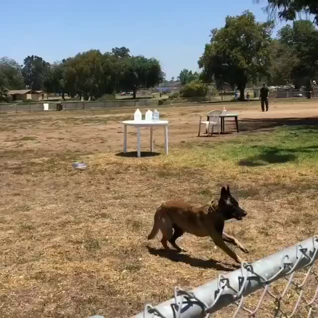 Watch and share K9training GIFs and Flyingdog GIFs by vani  on Gfycat