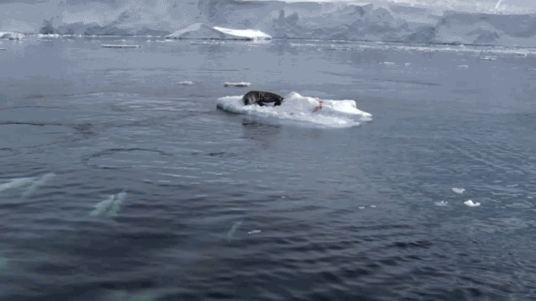 TheDepthsBelow, science, Orcas are too smart for my liking (reddit) GIFs