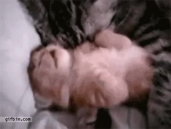 Watch this GIF on Gfycat. Discover more related GIFs on Gfycat