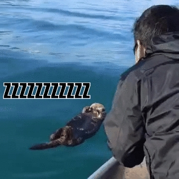 animaltextgifs, Waking a sleeping otter (my first attempt) (reddit) GIFs