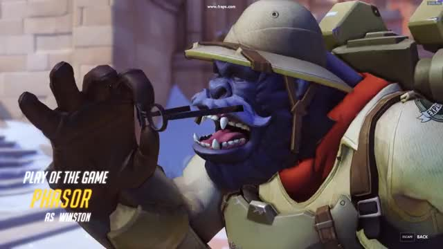 Watch animal GIF on Gfycat. Discover more Overwatch GIFs on Gfycat