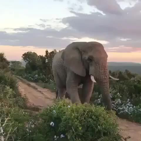 Watch i bless the rains GIF by PM_ME_STEAM_K3YS (@pmmesteamk3ys) on Gfycat. Discover more adorable, amazing, elephant, elephantlove, elephantlover, elephants, happy, love, southafrica, wildlife GIFs on Gfycat
