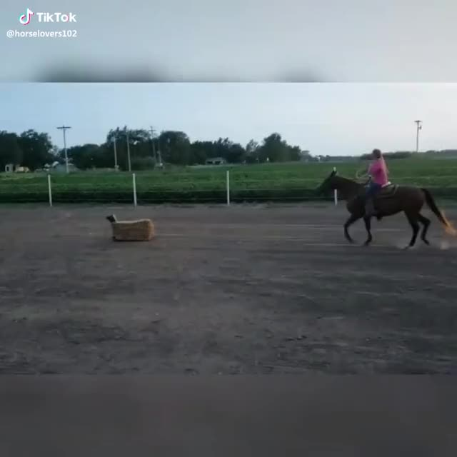 Watch and share Worked On Roping Tonight💗 LOTS Of Progress!👍 GIFs by neatlisten on Gfycat