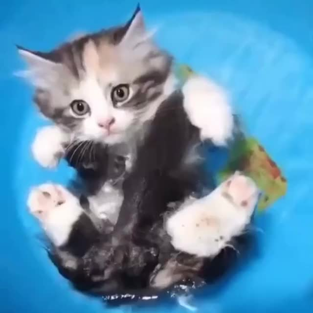 Watch and share Just Drifting Along… GIFs by Ancalagon on Gfycat