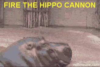 Hippo GIFs