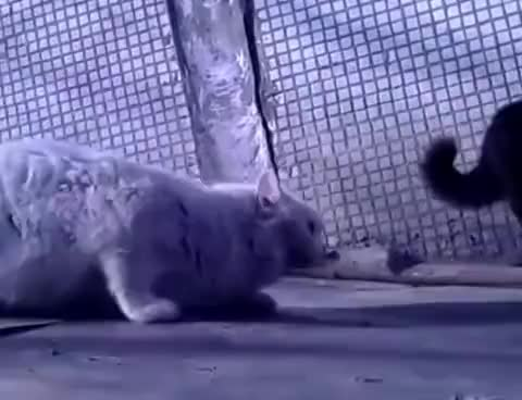 Watch and share Мартовские Коты GIFs on Gfycat