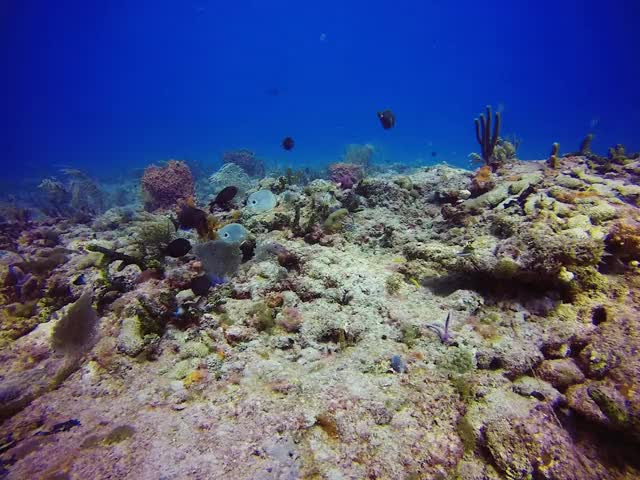 Watch and share Reef GIFs by domdiggity on Gfycat