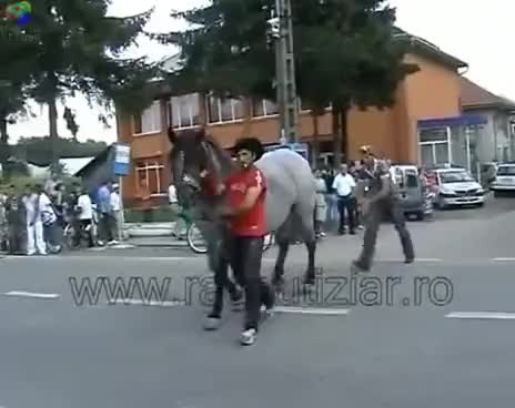 Watch and share Caballo GIFs and Patada GIFs on Gfycat