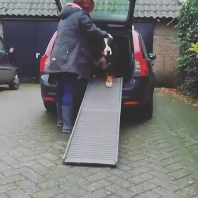 Watch and share Dogs GIFs by tothetenthpower on Gfycat