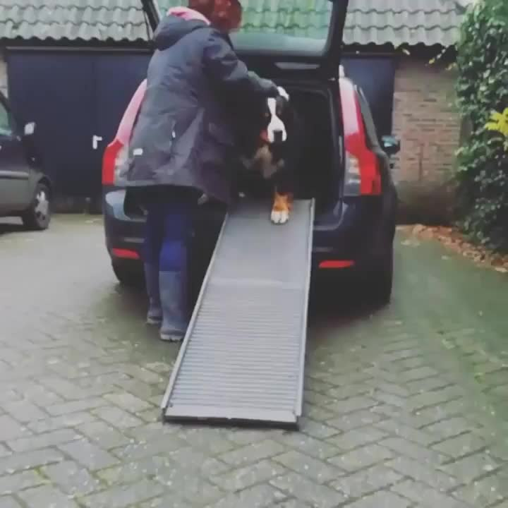 dogs, Car full of happiness GIFs