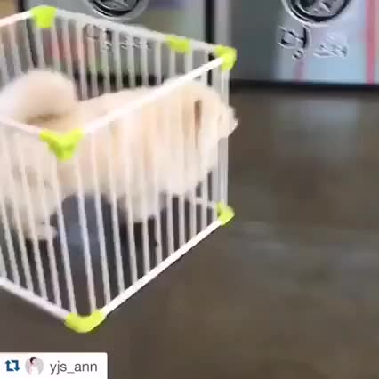 Watch and share Can't Cage The Fluff GIFs on Gfycat