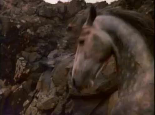 The silver brumby, the silver stallion, yarraman, Yarraman the victor GIFs